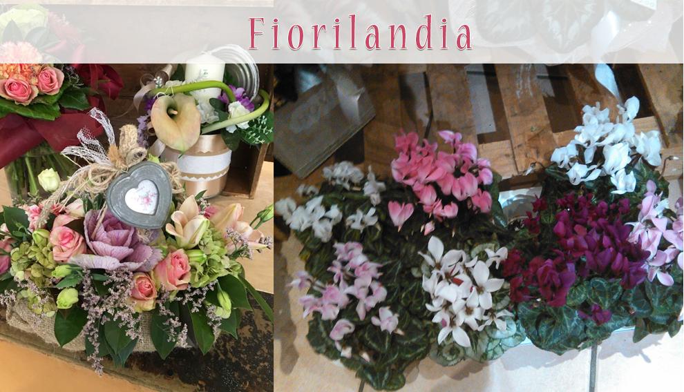 Piante Da Regalo : Fiori piante ed articoli da regalo quarrata il su